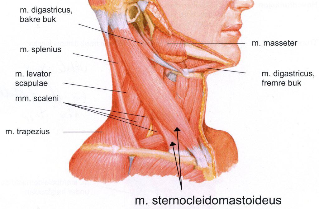 legesvar trykk i hodet stiv i nakken